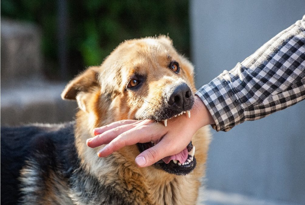 What You Need to Know About Dog Bite Awareness Week